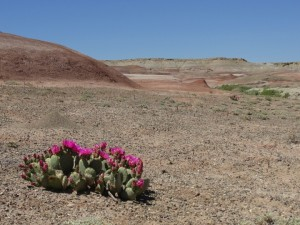 Cactus near Factory Butte